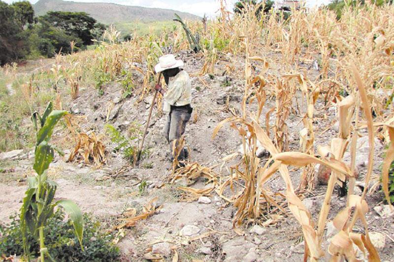 Plan de inversión de FAO para corredor seco GUATEMALA