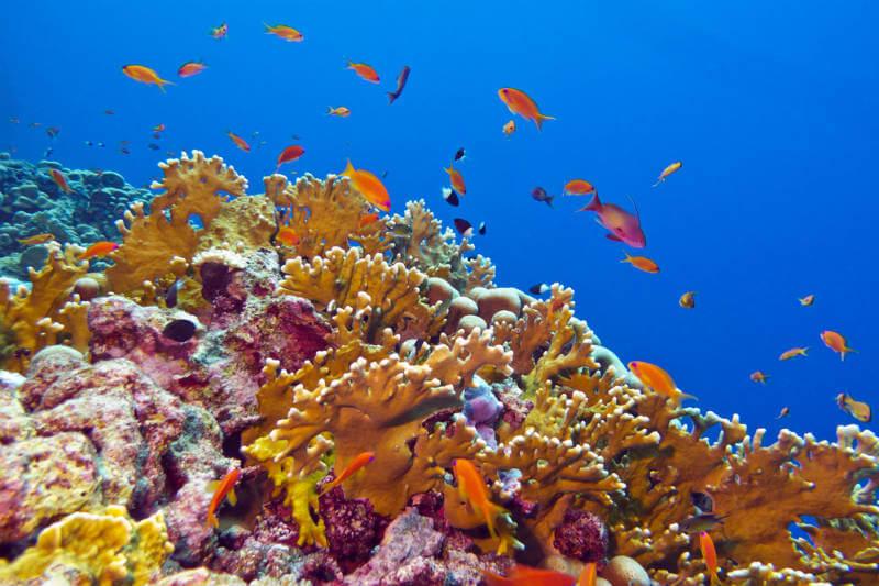 Ministros de Ambiente firmaron la Declaración de la Vida del Arrecife de Coral, que buscará reforzar la seguridad sobre los arrecifes de coral en el Pacífico.