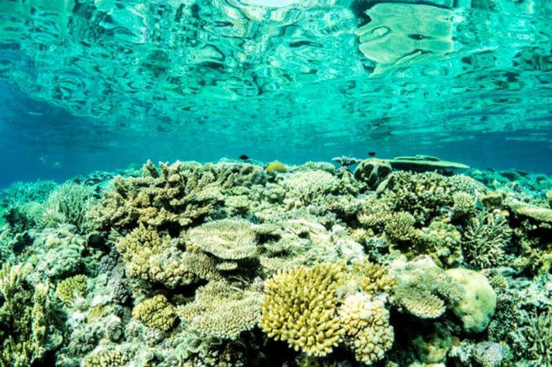 El científico Karlo Hock ha identificado un posible sistema de soporte de vida para reparar el daño ocasionado por el blanqueamiento o las estrellas de mar.