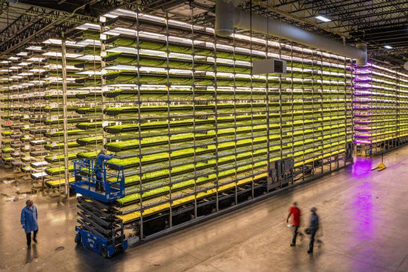 Junto con otros inversores, IKEA apoyará un sistema de cultivo vertical patentado por AeroFarms que permite cultivar sin tierra y con un 95% menos de agua.