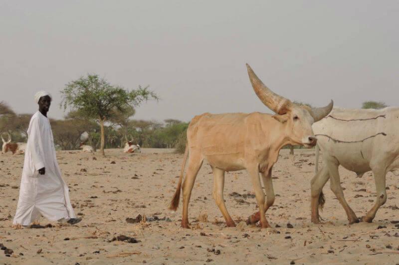 Al tener conflictos con las tropas del gobierno por las tierras de pastoreo, la falta de pastos, atención veterinaria y educación, la vida de los pastores se complica.