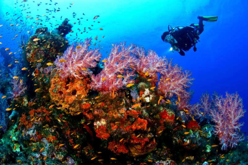 Es la primera vez que un país en desarrollo toma una decisión así. El objetivo es proteger el arrecife de coral más grande del hemisferio occidental.