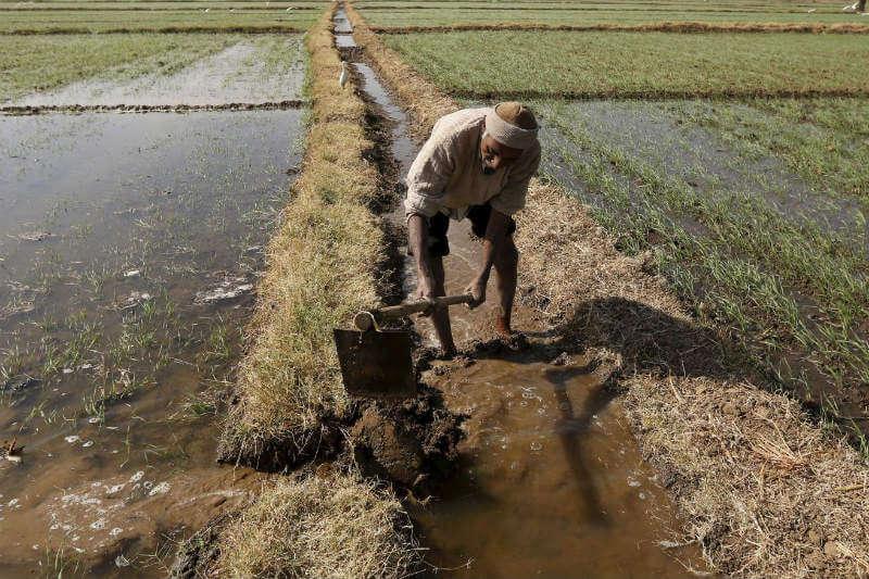 Según una encuesta económica, el fenómeno está afectando la productividad agrícola de la India y los ingresos de los agricultores.