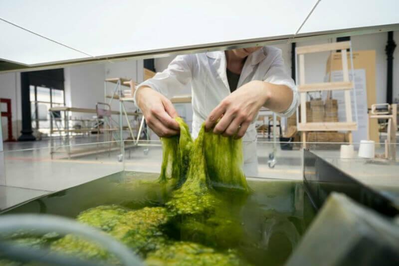 Diseñadores holandeses crearon un nuevo material a base de algas que podría emplearse como materia prima para fabricar mediante impresión 3D cualquier objeto.