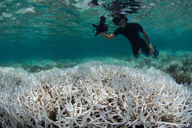 El incremento de la temperatura de las aguas ha provocado el blanqueamiento y la muerte de más de la mitad de los corales de la Gran Barrera de Australia.
