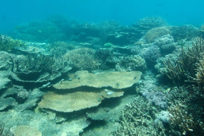 """Estudio muestra que grandes extensiones de los océanos se están convirtiendo en """"zonas muertas"""" debido a la falta de oxígeno, amenazando la vida marina."""