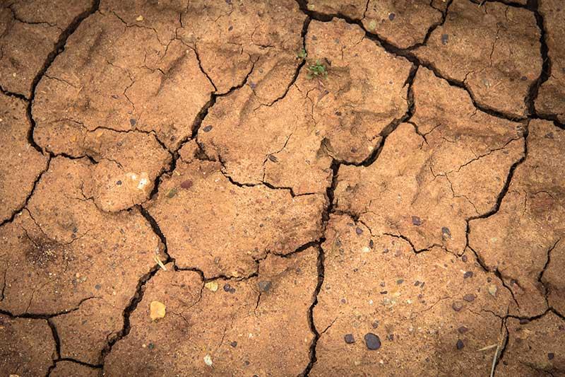 Sequía en Texas después de Huracán Harvey - Foto por Holger Link/ Unsplash