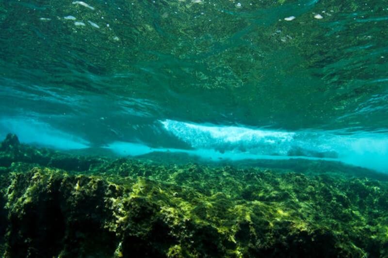 Científicos descubrieron que el deshielo marino aumenta el flujo de nutrientes hacia el Ártico central, lo que podría alterar la red trófica de muchas formas.