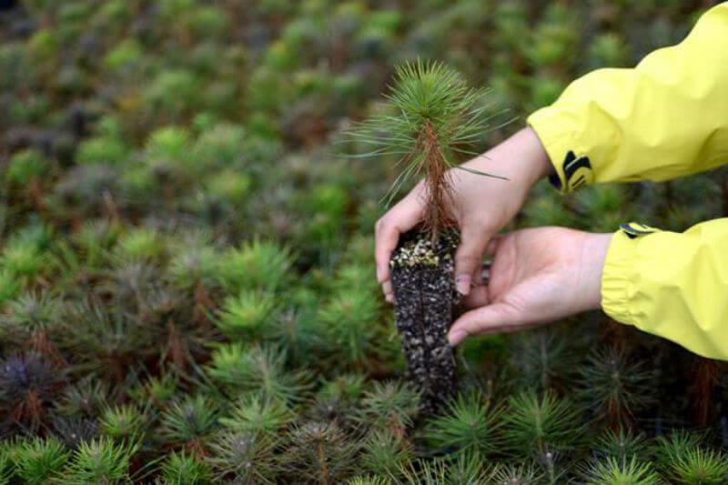 El país inició con un programa de reforestación muy ambicioso, cuyos efectos a largo plazo en términos humanos y medioambientales son invaluables.