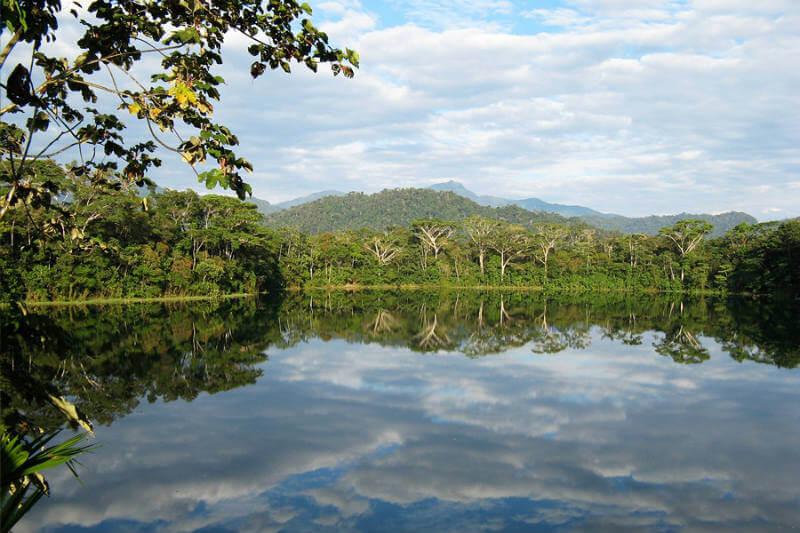 Sequías, inundaciones y deforestación, han terminado con medio millón de castaños de cuyo fruto depende la permanencia de comunidades indígenas.