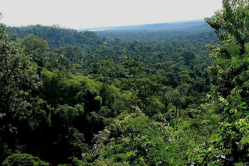 En un estudio, 96 científicos alertan sobre los peligros que corren la fauna y la flora del bosque, del que hoy queda entre un 8% y 12% por la tala de árboles.