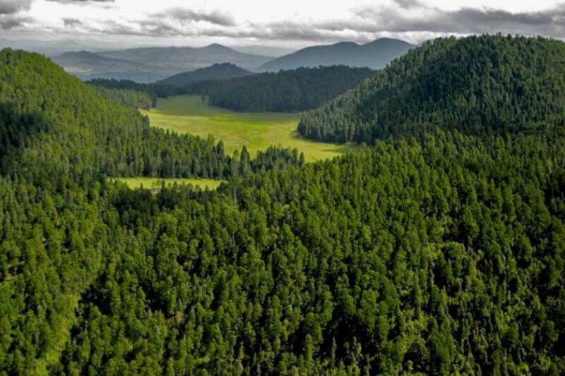 Según un estudio, los ecosistemas forestales del país capturan al año 170 megatoneladas de dióxido de carbono.