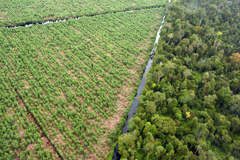 El Gobierno lanzó en 2015 un plan para restaurar las 2.5 millones de hectáreas de turberas secas (que almacenan carbono) para 2020, al rehumedecer la turba.