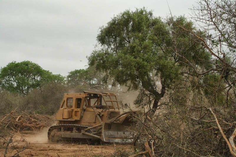En 2017 la deforestación en el norte de Argentina alcanzó las 128,217 hectáreas, de las cuales 59,541 eran bosques protegidos, reportó Greenpeace.