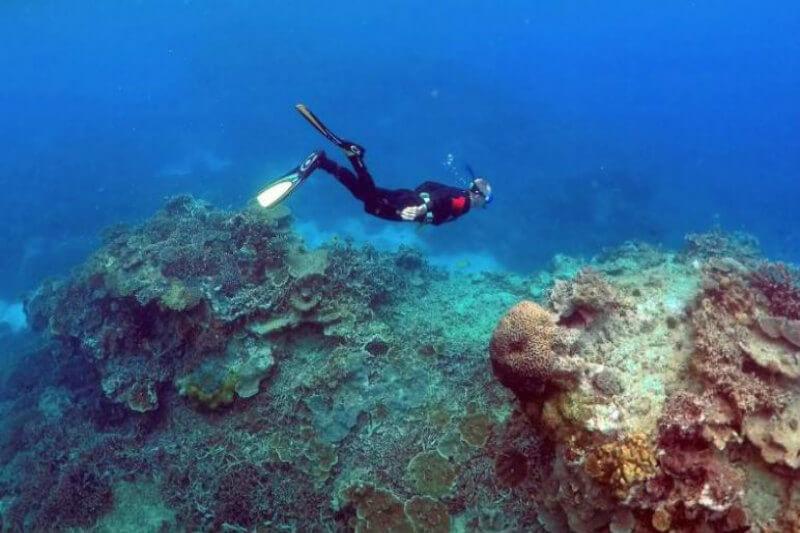 Los arrecifes de coral podrían disolverse antes del 2100 a medida que el cambio climático provocado por el hombre impulse la acidificación de los océanos.