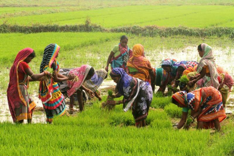 Según el modelo, los sistemas alimentarios deben ser sostenibles y los cambios deben guiarse por evidencia científica e involucrar a una amplia gama de socios.