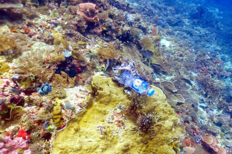 Los investigadores predicen que la cantidad de plástico atrapado en los arrecifes de coral aumentará un 40% en 2025, a 15.7 mil millones de piezas.