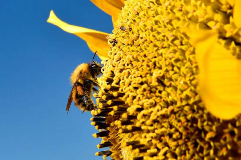 Gracias al polen, que funciona como registrador de temperatura, científicos confirman que la actividad humana ha revertido un proceso de enfriamiento natural.