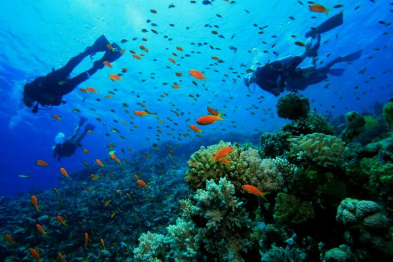 Gobierno de Quintana Roo, hoteleros y The Nature Conservancy crearán fideicomiso para proteger y rescatar una de las maravillas naturales más amenazadas.