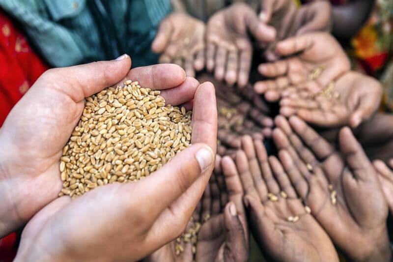Informe señala que eventos climáticos extremos, como la sequía, fueron los principales desencadenantes de las crisis alimentarias en 23 países el año pasado.