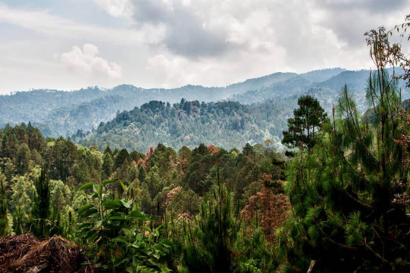 Expertos describen la conexión entre el crecimiento de bosques occidentales y la deforestación imparable en otras partes del mundo debido a la tala comercial.