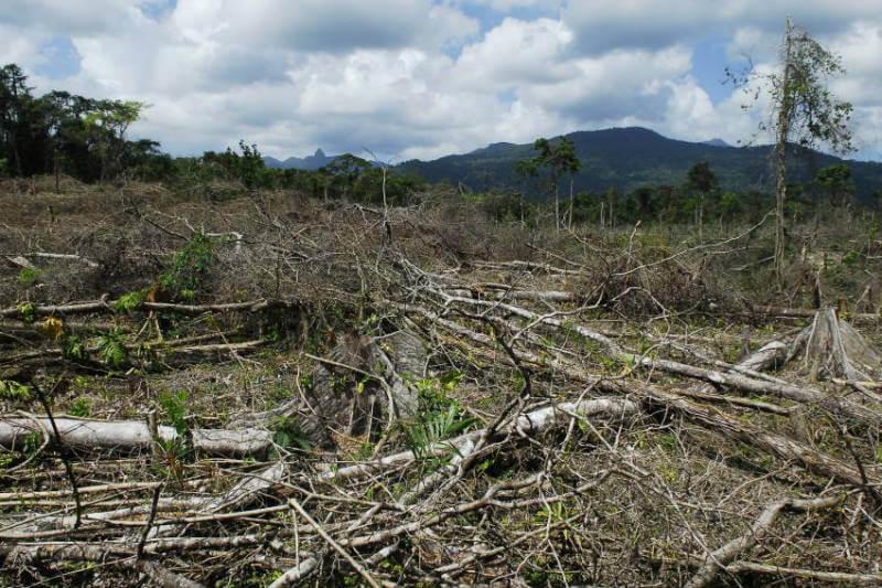 La JIFE advierte de que el narcotráfico es responsable del 15% y el 30% de la pérdida de bosques en Guatemala, Honduras y Nicaragua.