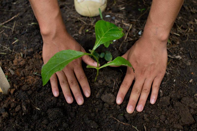 En el marco del Plan Provincial de Forestación, el Gobierno de Tucumán busca profundizar las acciones de recuperación del monte nativo.