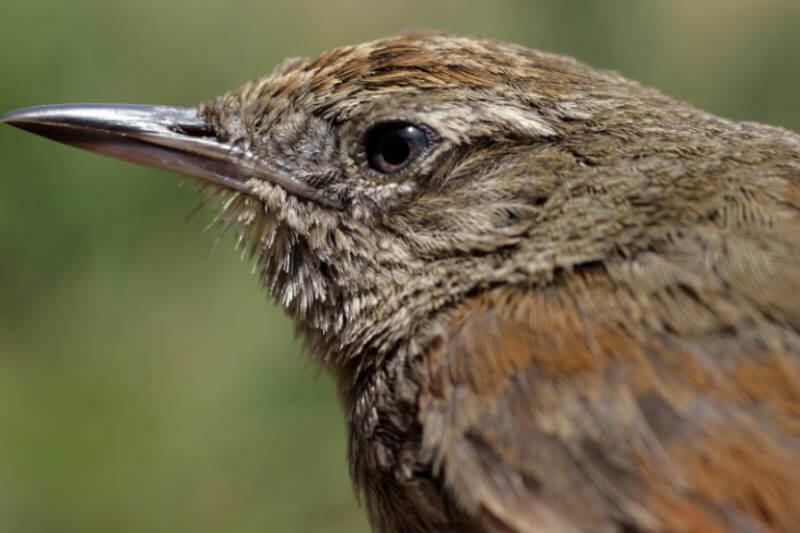 En el país sudamericano, algunas aves y anfibios tendrán que adaptarse a nuevos hábitats para poder sobrevivir.