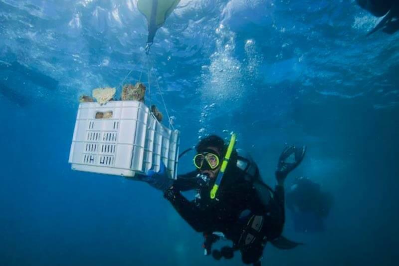 Grupos de conservación y voluntarios están recolectando semillas autóctonas para replantar bosques e injertando corales rotos en los arrecifes.