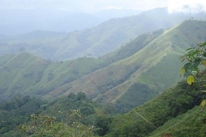 Reforestación de Latam podría neturalizar sus emisiones de CO2.