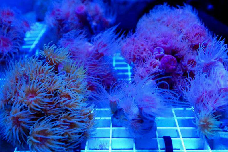 De ser aprobada la ley, se prohibirá la venta de bloqueadores con sustancias químicas que presuntamente contribuyen a la destrucción de los arrecifes de coral.