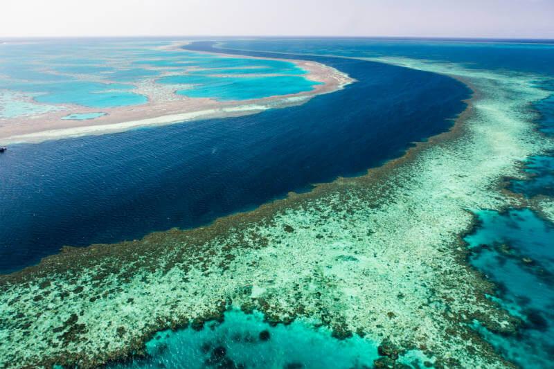 Como parte de un plan de conservación, el gobierno australiano se asociará con la Fundación Great Barrier Reef para controlar la salud del arrecife.