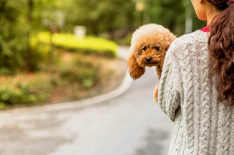 Los animales domésticos se ven doblemente afectados al experimentar por un lado su propia adaptación y por otro los efectos de la adaptación del ser humano.