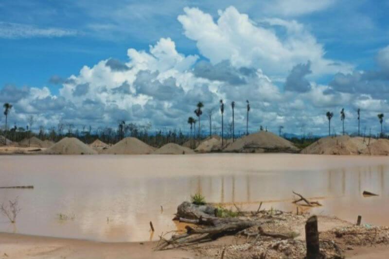 La WWF Perú anunció que más de 155,000 árboles serán plantados en 140 hectáreas de la región degradadas por la minería ilegal.