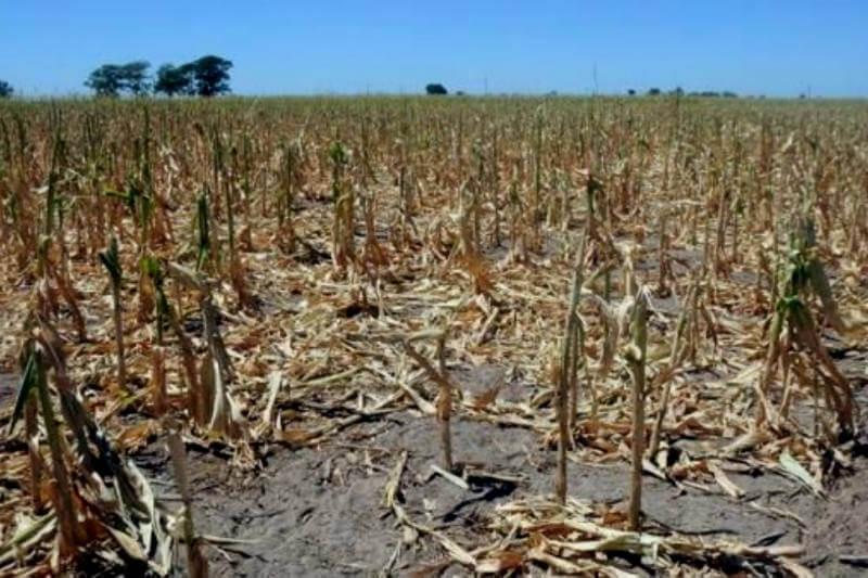 El Ministerio de Agroindustria de la Nación oficializó para la provincia de Córdoba la declaración de estado de emergencia y/o desastre agropecuario.