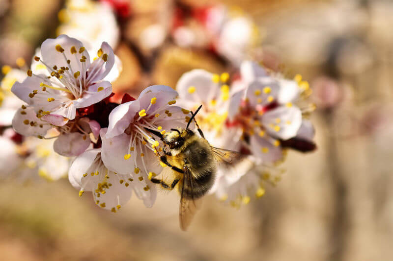 Según apicultores y una encuesta, el 40% de las colmenas en EE. UU. murieron el año pasado, en parte por los patrones climáticos irregulares y por ácaros.