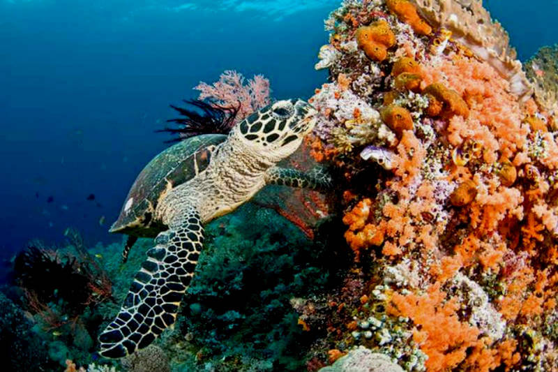 Científicos indican que aun las reservas marinas mejor protegidas no amortiguarán el impacto del aumento de temperatura en la biodiversidad de su ecosistema.