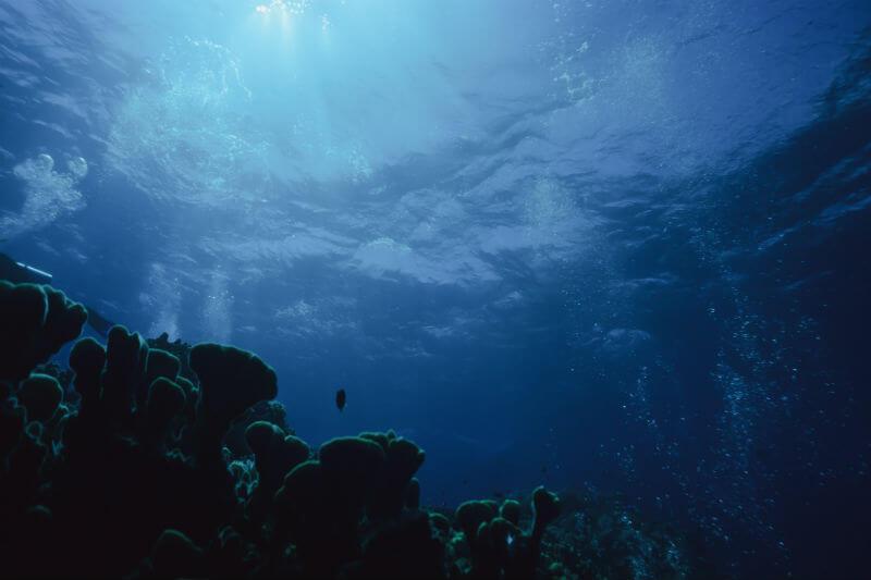 Las muertes de coral se han dado en los últimos 30,000 años y se han recuperado, pero ahora los científicos temen que no sobrevivan a las temperaturas actuales.