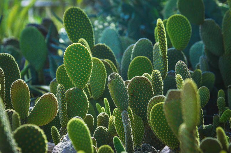 Con el jugo del nopal, una académica mexicana ha creado un plástico natural biodegradable que puede disminuir la contaminación.