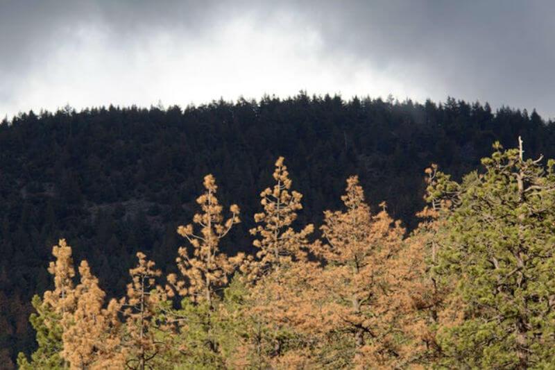 Nuevo estudio es el primero en producir estimaciones sólidas de los beneficios hidrológicos del trabajo de restauración forestal.