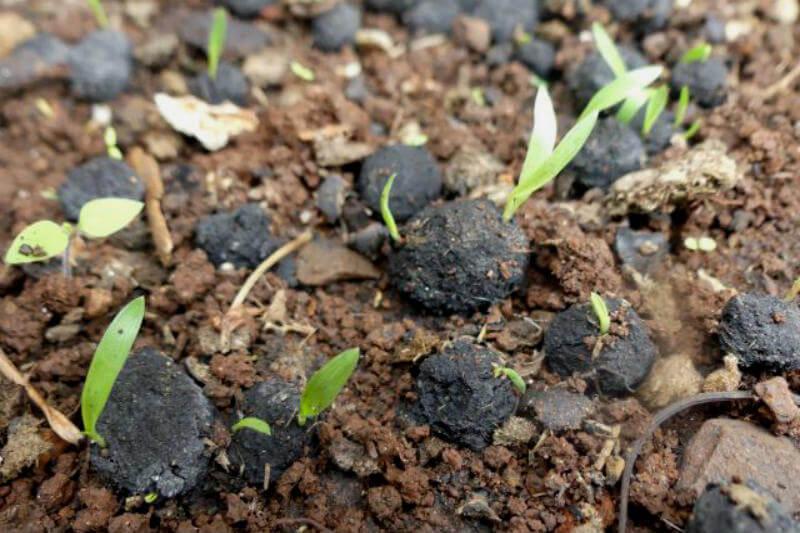 """Las Seedballs Kenya, unas """"bolas de semillas"""" pueden reducir increíblemente el costo de la plantación de árboles en comparación con el método tradicional."""