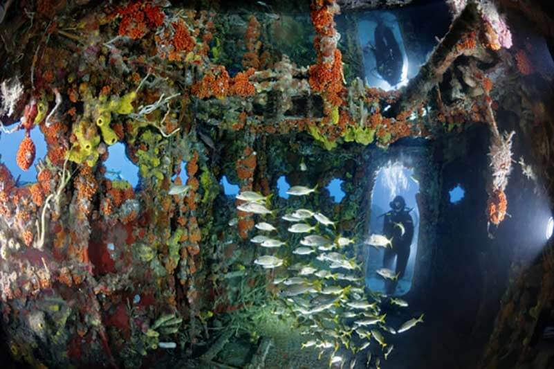Arrecife artificial como solución al cambio climático.