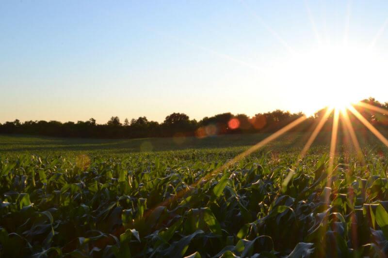 Agricultura, agua, cambio climático... La relación entre ellos complica el reto de dar de comer a todos.