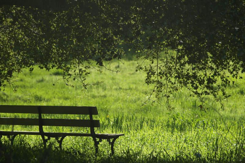 Estudio muestra que los residentes de las áreas donde se realizó un proyecto de reforestación reportaron una disminución en sentimientos de depresión en un 40%.