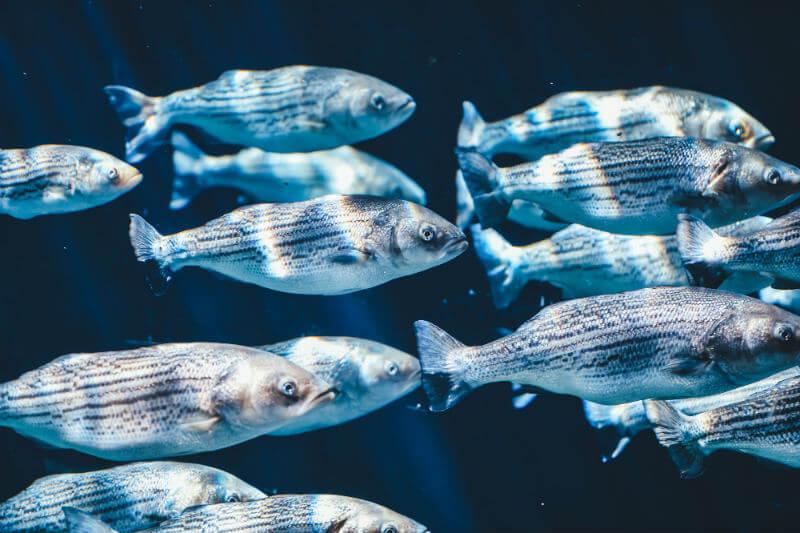 El cambio climático desplaza bancos marinos de lugares como Kiribati o Ecuador, alterando corales y comprometiendo la seguridad alimentaria del mundo.
