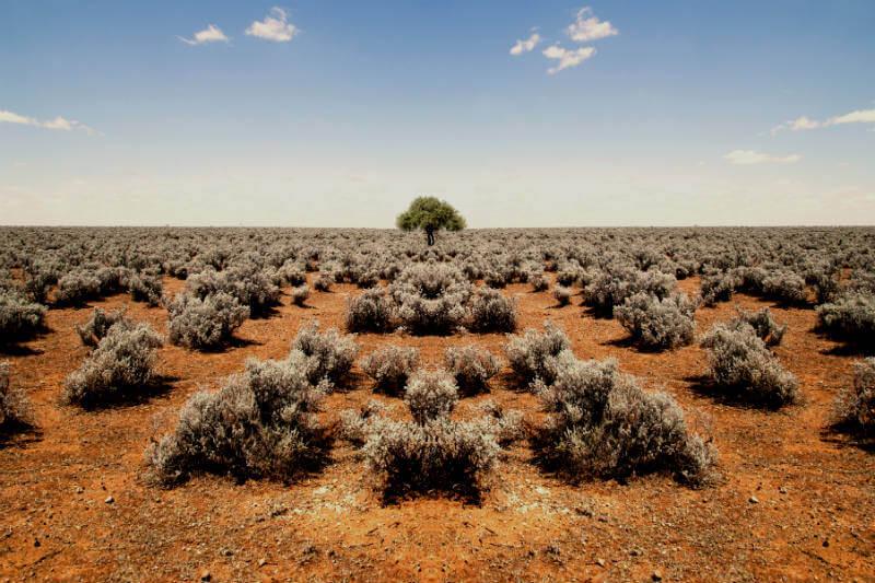 Según el Departamento de Industrias Primarias, Nueva Gales del Sur sufre de sequía en un 95%; provocando cambios drásticos en la agricultura y estilos de vida.