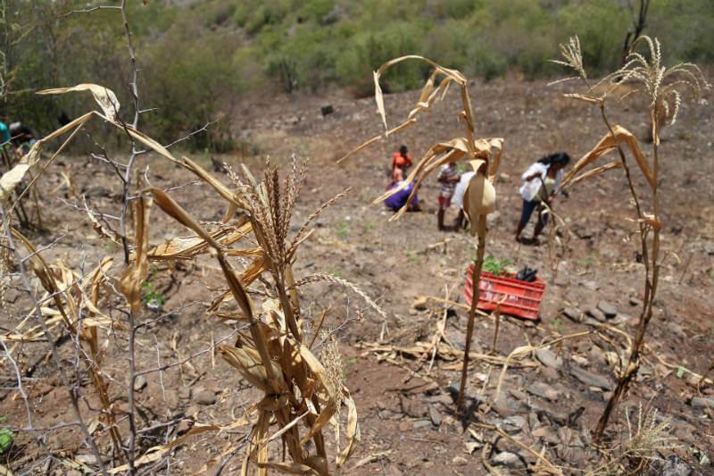 La FAO y el WFP advierten sobre los efectos de la sequía, la cual complica la seguridad alimentaria y nutrición de 2.1 millones de personas en Centroamérica.