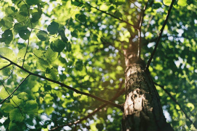 Estudio de los bosques de Europa Central sugiere que las temperaturas más altas y la contaminación, están debilitando a los árboles y que capturen menos CO2.