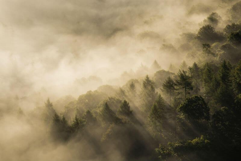 """""""Bosque de Niebla"""" es el primer documental en compensar las emisiones causadas por su producción mediante el uso de créditos de reducción de carbono de la ONU."""
