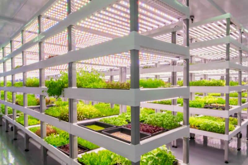 En la granja de Oasis Biotech, se cultivan productos frescos mediante un sistema hidropónico, reciclando 100% de su agua y nutrientes, e iluminación LED.